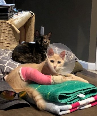 Purrcy and Tootsie